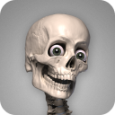 Skelly MOD (Cracked): Poseable Anatomy Model